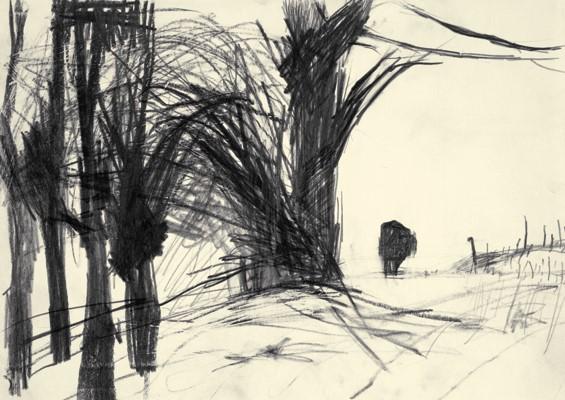 : Ochse, 2011, Graphit auf Papier, 21,5 x 30,5 cm, © VG Bild-Kunst Bonn